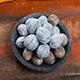 8 Advantages of Nutmeg Essential Oil